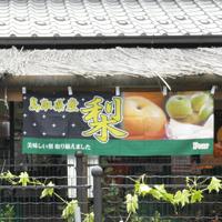 のぼり 鳥取県産 梨
